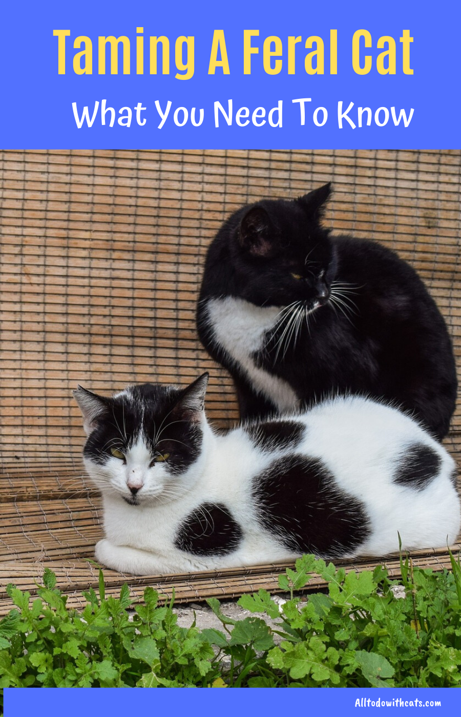 Can You Tame A Feral Cat What You Should Know In 2020 Feral Cats Pet Care Cats Kitten Care
