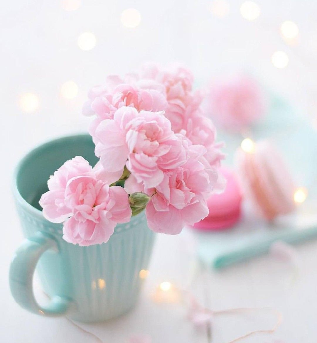 pink flowers in a cup flowers pinterest flower flowers and