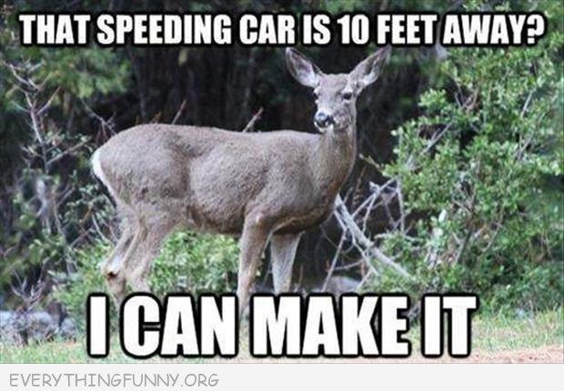 Everything Funny Deer Hunting Humor Hunting Humor Funny Hunting Pics