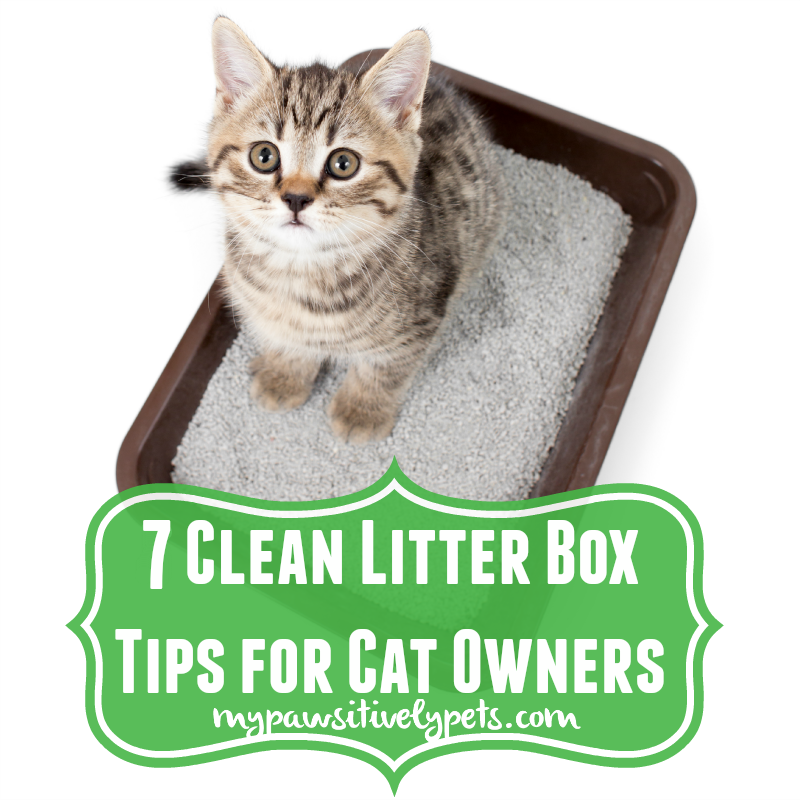 7 Clean Litter Box Tips For Cat Owners Cat Urine Cat Training Litter Box Cat Owners