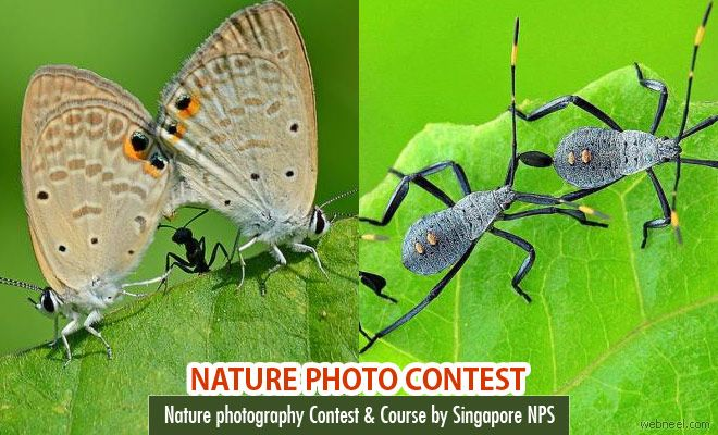 Nature photography Contest and course by NPS Singapore. Read full article: http://webneel.com/photography-contest-competition6 | more http://webneel.com/photography-news | Follow us www.pinterest.com/webneel