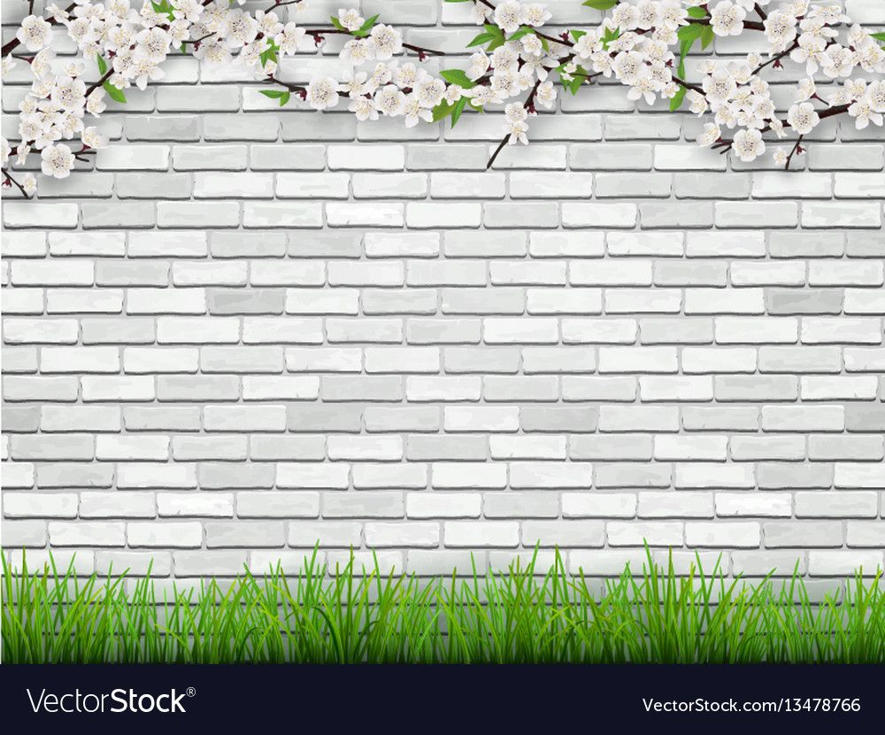 Blooming Tree Branch With Flowers And Green Leaves On White Brick Wall Background The Grass In The Foregr Wall Background Brick Wall Background Blooming Trees