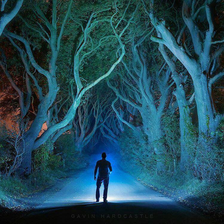 """E florestas adentro eu vou para perder minha mente e encontrar minha alma.  John Muir  Foto em """"The Dark Hedges"""" no Reino Unido por @fototripper"""