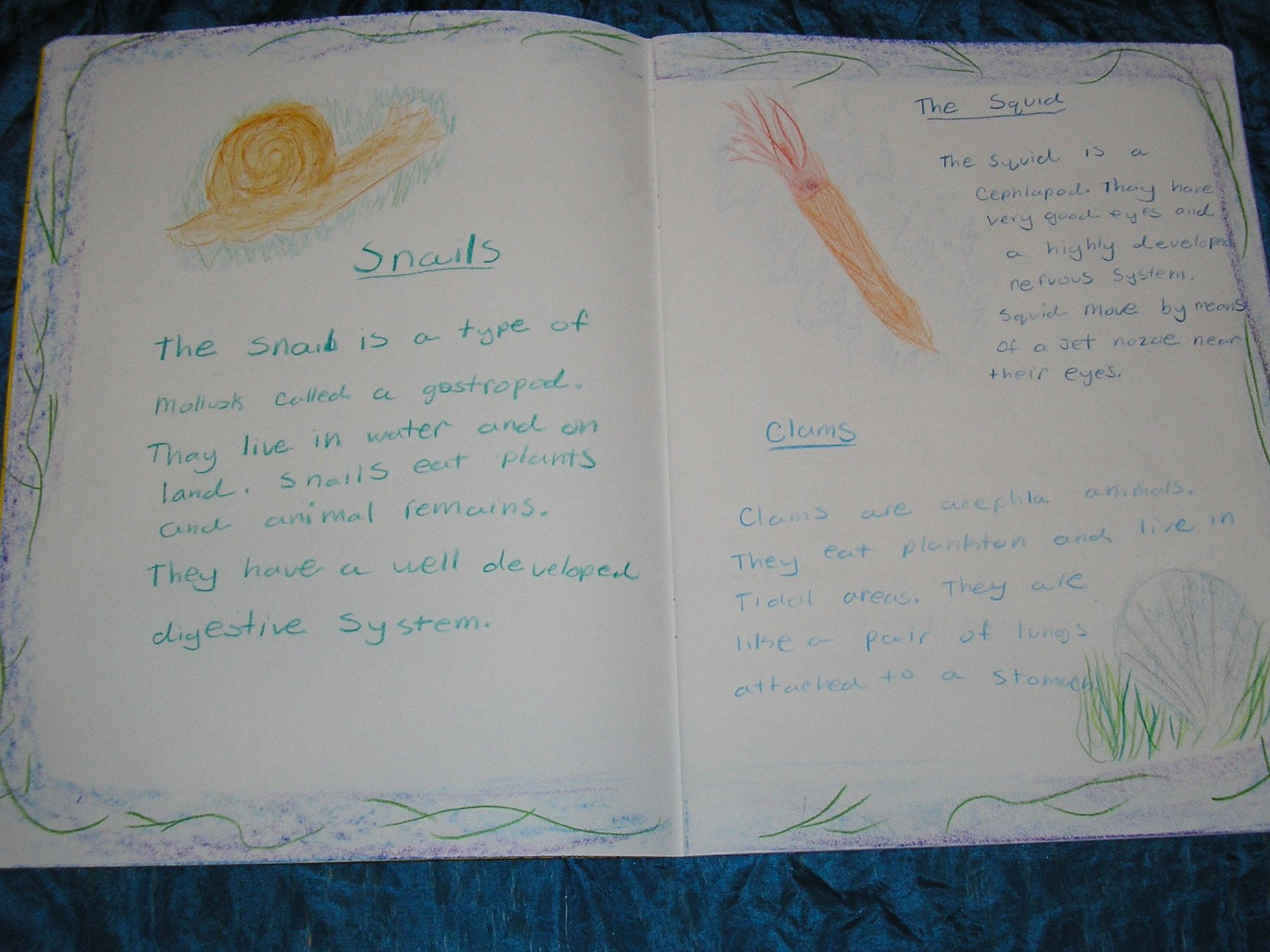 Waldorf 4th Grade Human Amp Animal Snail Main Lesson