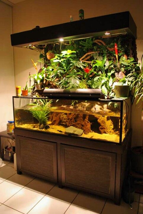 A Rather Cool Looking Tank. HaustiereEinrichtungFrischwasseraquariumfische AquarienAquarium DesignAquariumDiscus ...