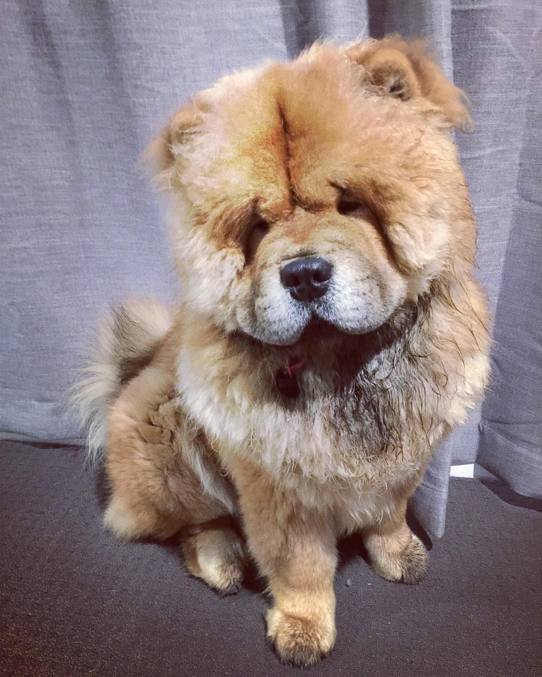 Yes Mum I Have Been Playing In The Dirt Wesleychow Chowchow