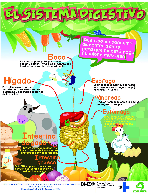 Sistema digestivo | Iván Pulgar | Pinterest | Natural, Ciencia y ...