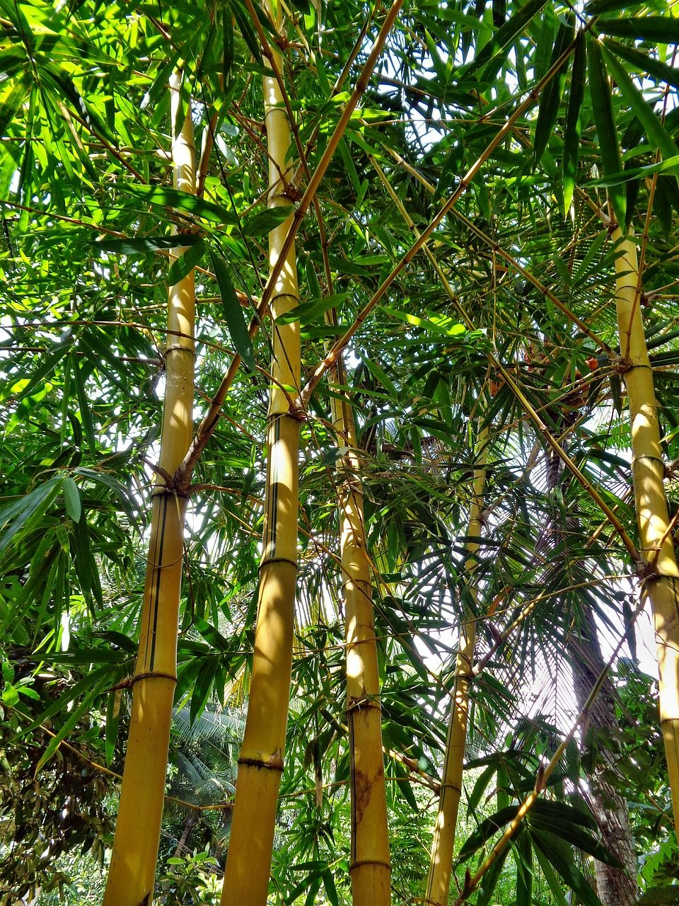 Forest, Bamboo, Forest, Nature, Green, Tree forest,