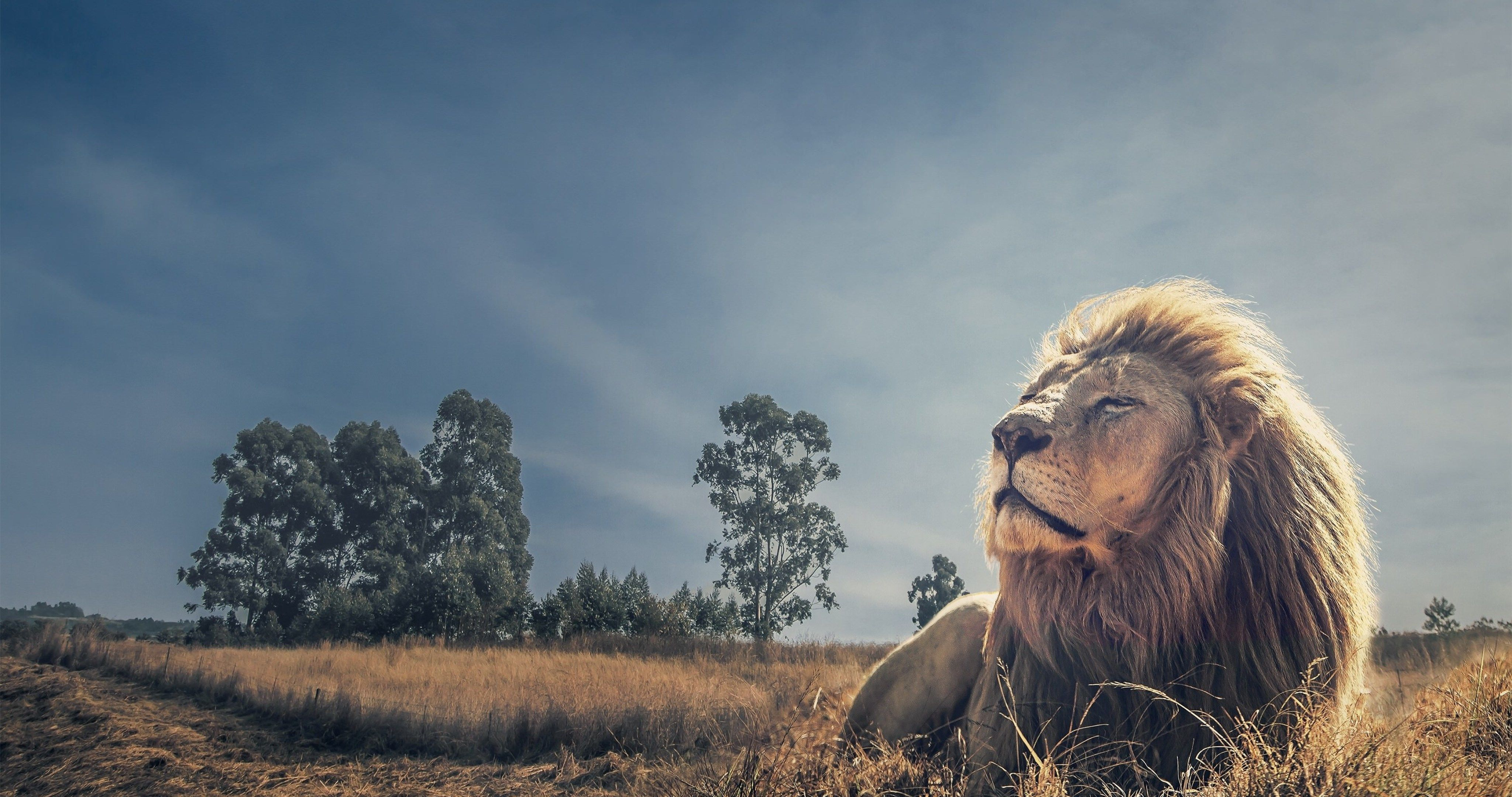 King Of Beasts 38 4k Ultra Hd Wallpaper Lion Images Lion