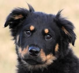 Adopt Atticus On Rottweiler Mix Dogs Rescue Dogs