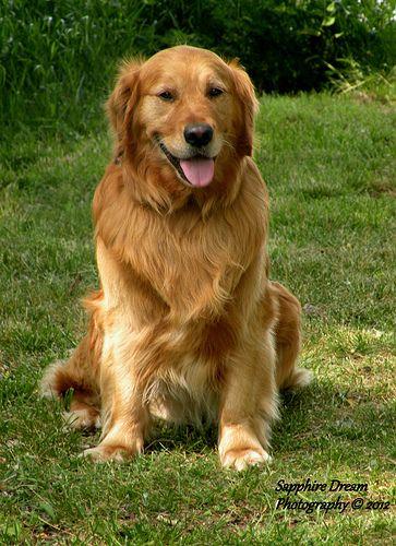 Austin On A Walk Most Beautiful Dog Breeds Beautiful Dog Breeds