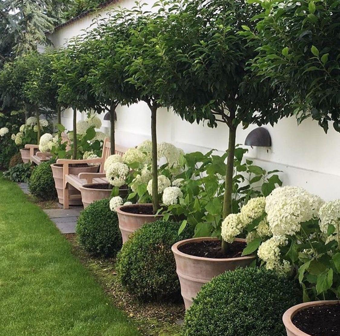 Dividing Wall With Mad Style Diy Backyard Landscaping Backyard Garden Design Outdoor Gardens