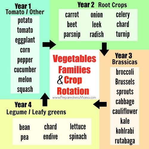 For healthy soil use this 4 year crop rotation plan by for Soil 2 year pgdm