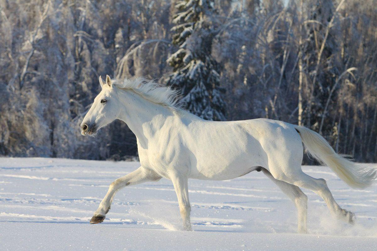 Amazing Wallpaper Horse Snow - b269eaf387ddb3d03925335f709f9cdd  Collection_59871.jpg