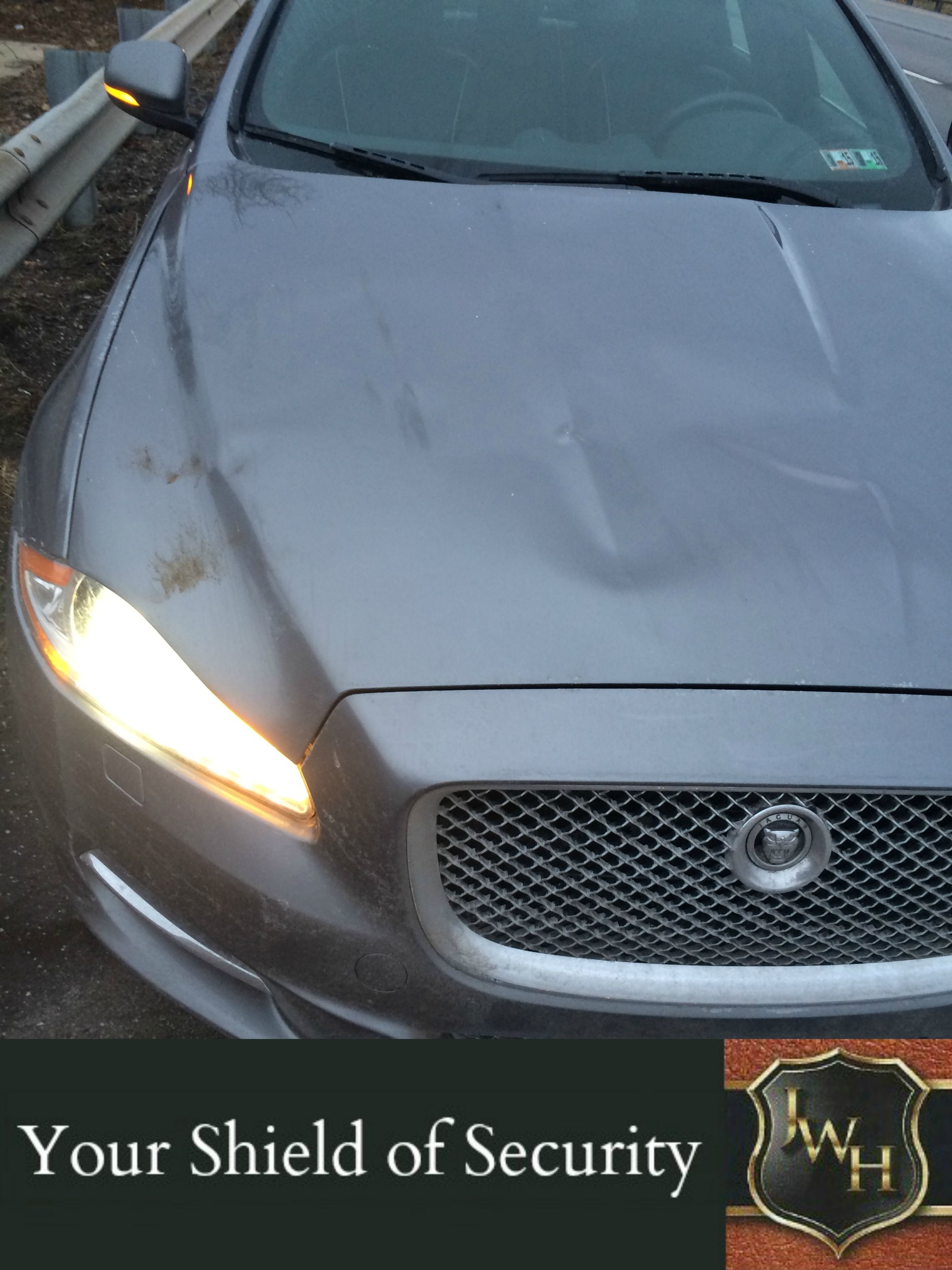 Can You Believe That This Car Hit A Deer On The Highway Going 65 Miles An Hour Not Much Damage Right That S Because A Car To Ou Truck Bed Car Vehicles