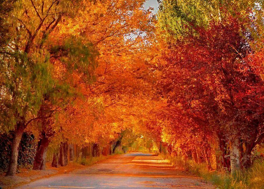 Fall , Mendoza