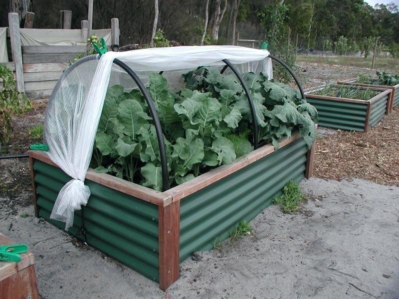 Raised Garden Bed Frame Ideas Garden Bed Netting Frame Galvanized