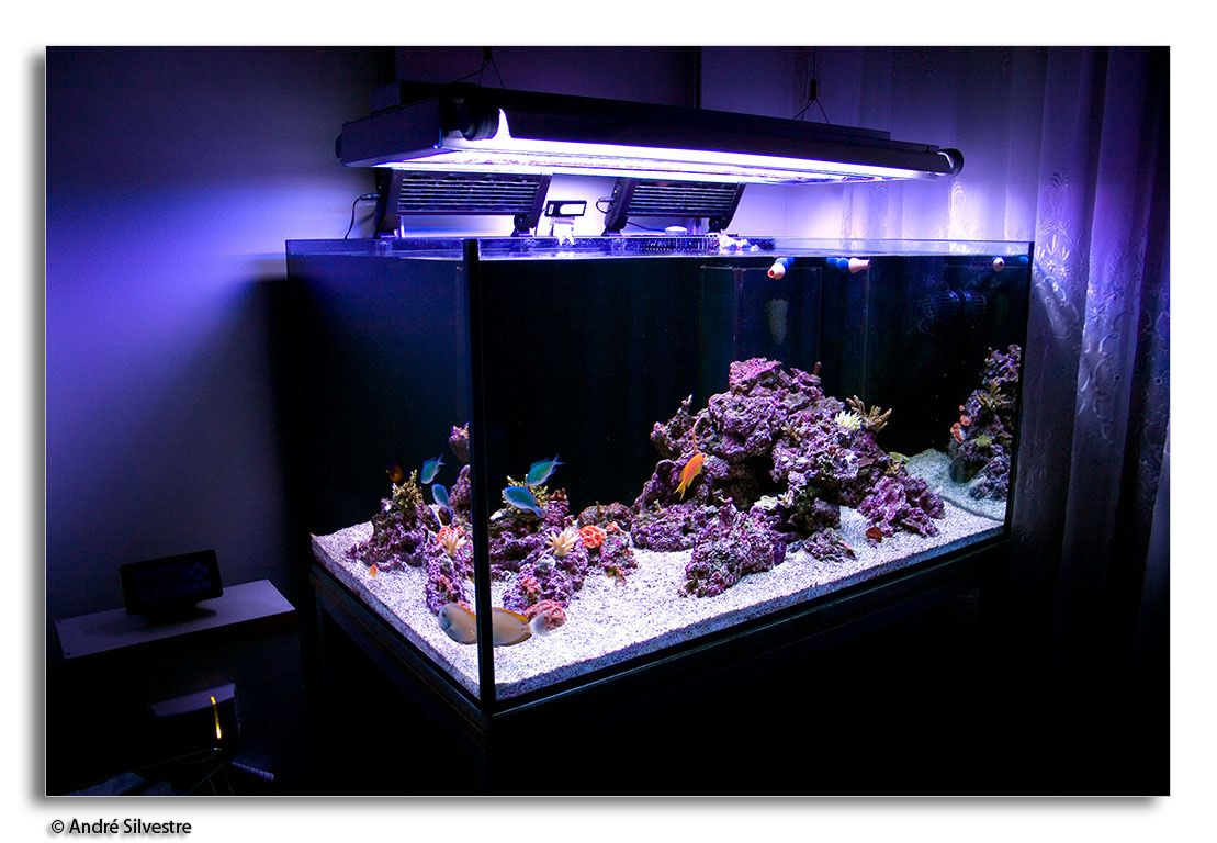 How to build a saltwater reefscape aquariums for Saltwater fish tank
