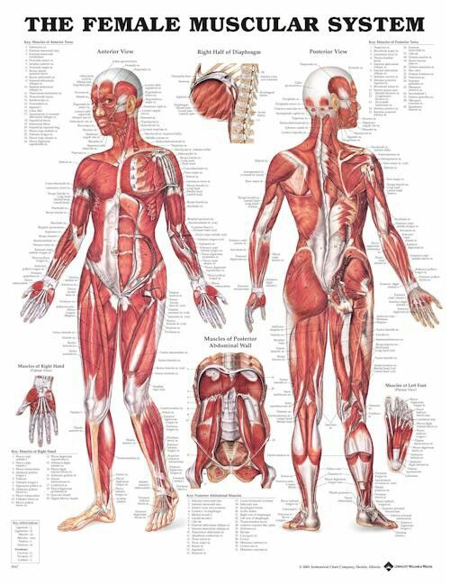 Know Your Body Know Which Muscles Or General Area Is Bothering You