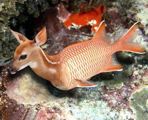 Funny-Deer-Fish-Photo   Animals Are Funny   Photoshopped ...