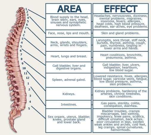 Nerve chart for the spine those who like to attempt  self diagnosis also vertebral subluxation and anatomy pinterest rh