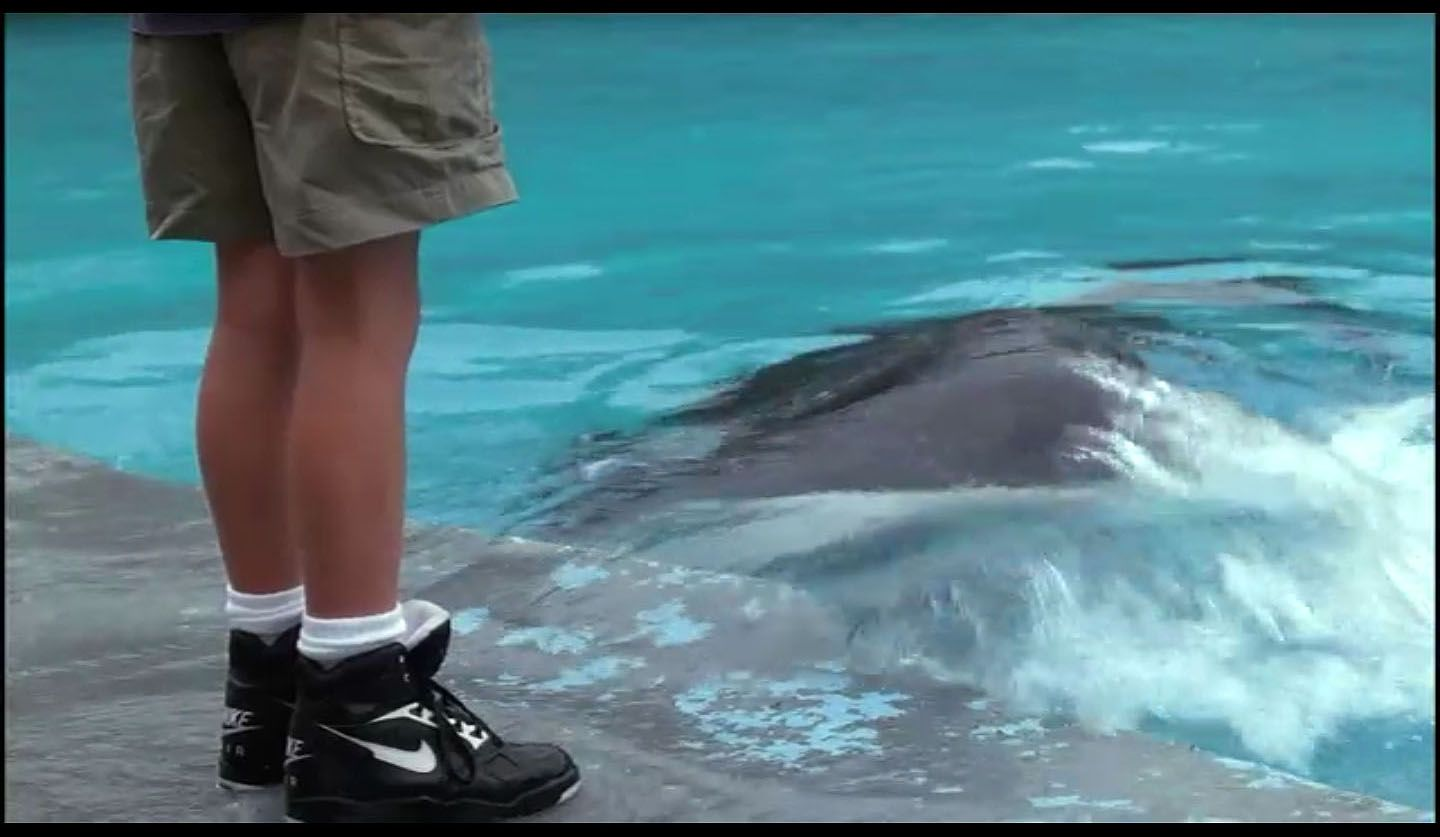 the latest 21490 1e6f3 I wanted these trainers for years. Nike Air Sabre Flight (High). Free Willy