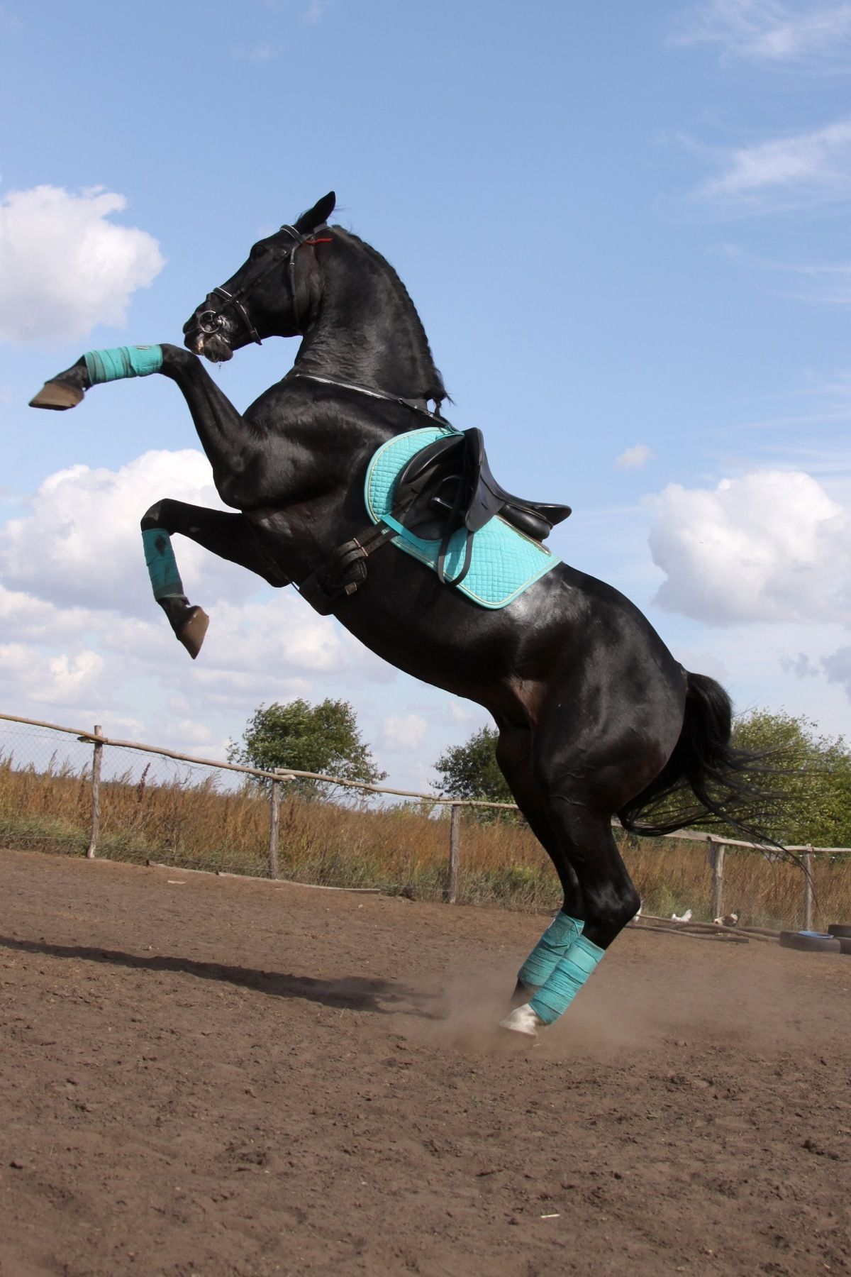 black and teal color combination! this looks so sharp! <3 | horses