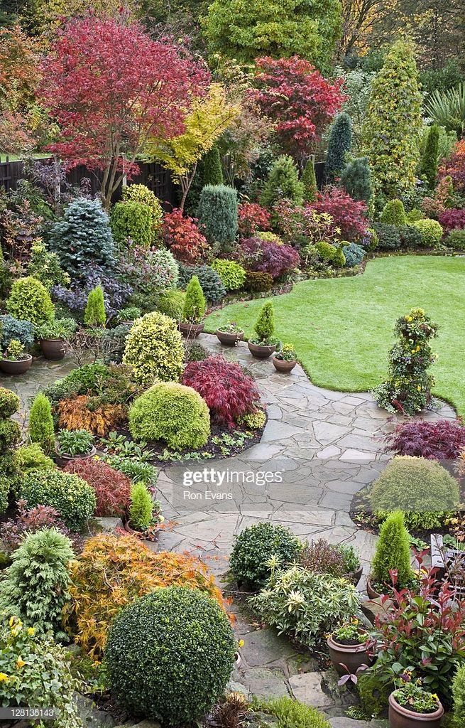 Japanese maples and evergreen shrubs surround neatly clipped lawn and...