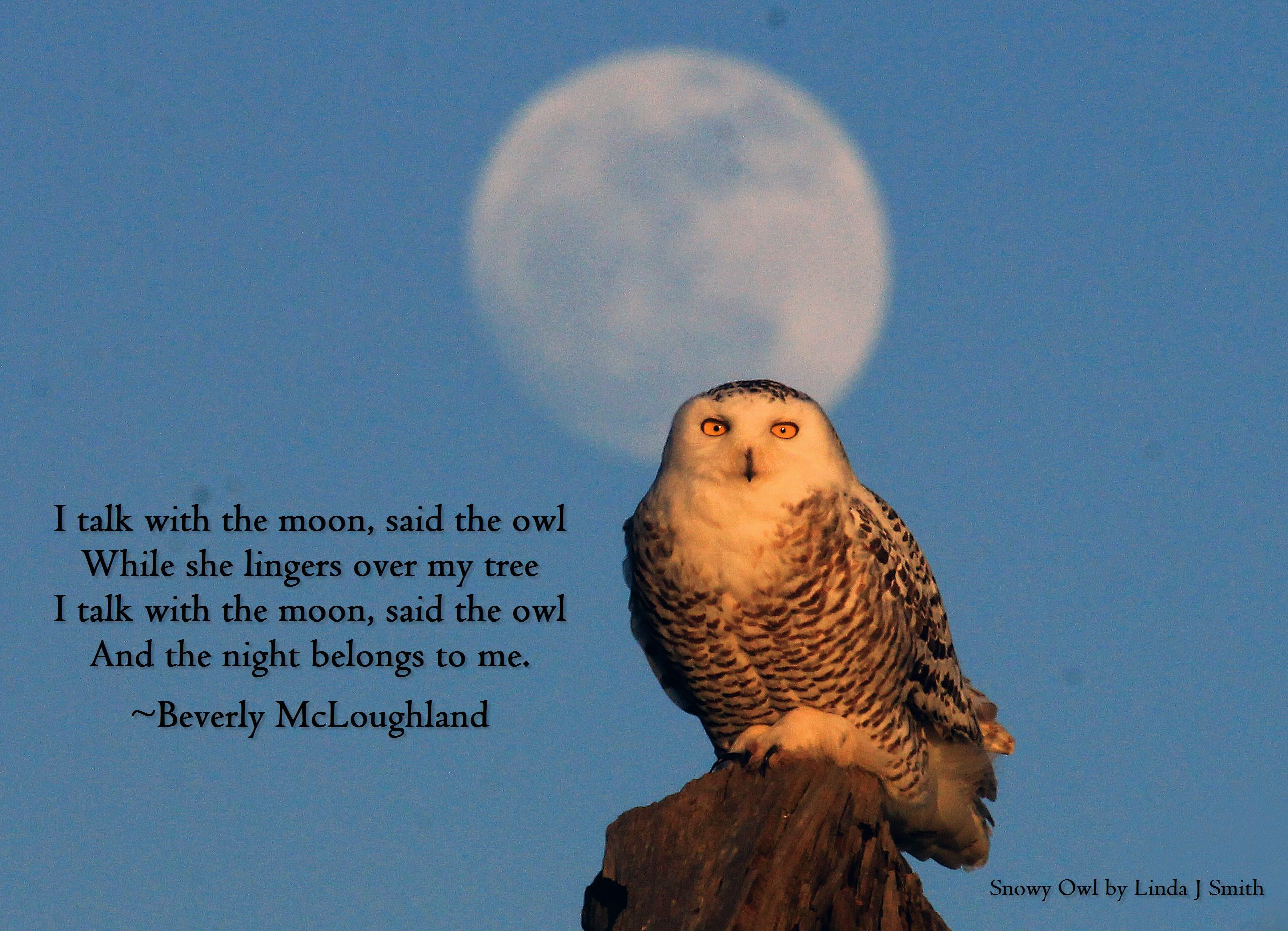 Lovely verse and lovely photo. Photo by Birds & Blooms reader Linda J Smith. Owls are incredible.