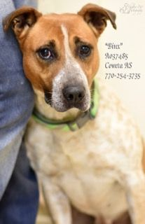 A 8binxa037485pic1 Jpg Dog Adoption Dogs Petsmart Dog