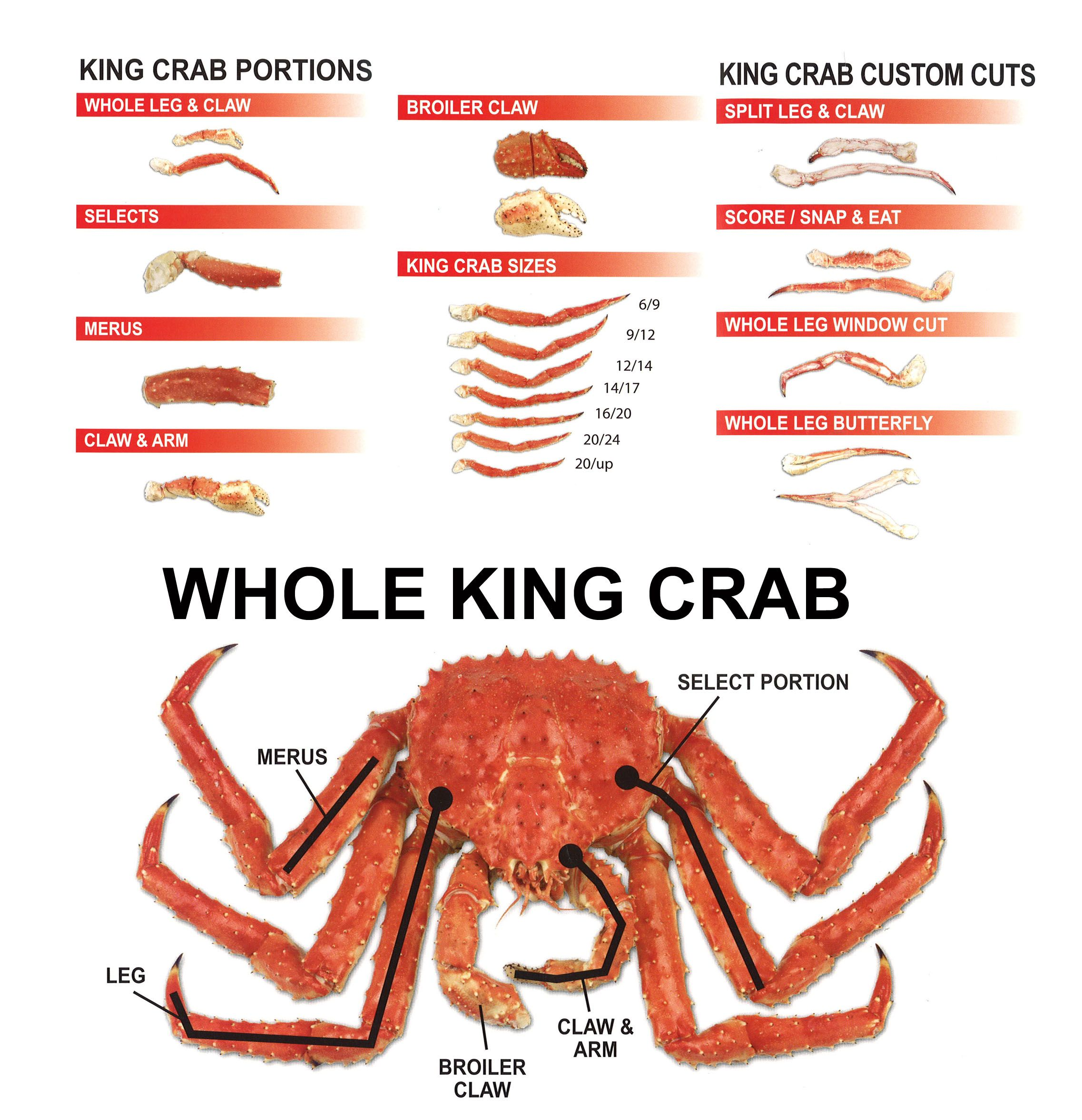 Snow Crab Leg Diagram - Auto Electrical Wiring Diagram •
