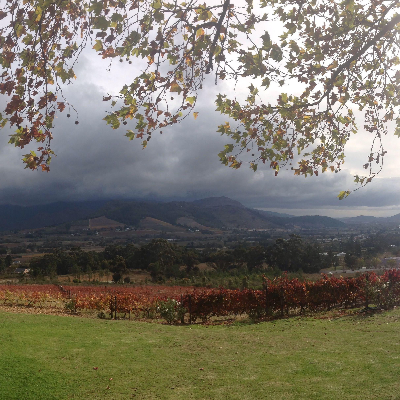 Autumn In The Southern Hemisphere Vineyard Photo Essay Nature Travel