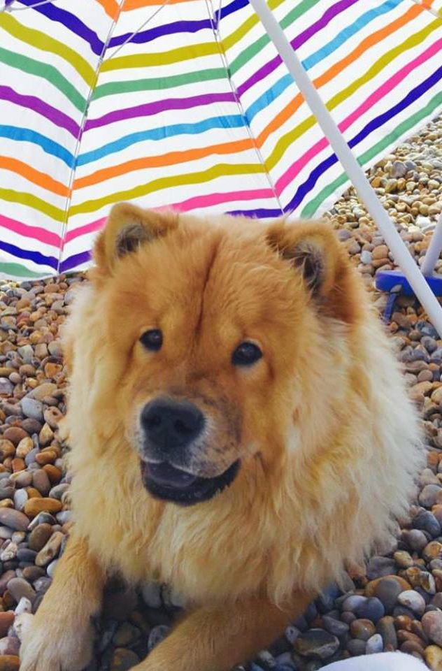 A Gorgeous Beach Shot Of Chow Chow Mango Full Name Mangow