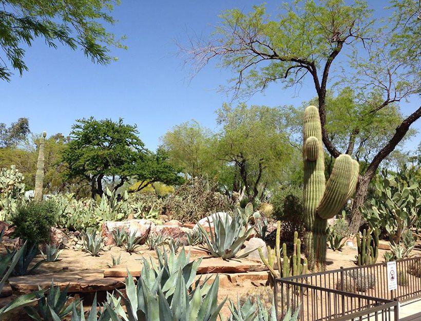 b26ec6b0d4d28df6f27c4700daf9c4d5 - Botanical Cactus Gardens Las Vegas Nv