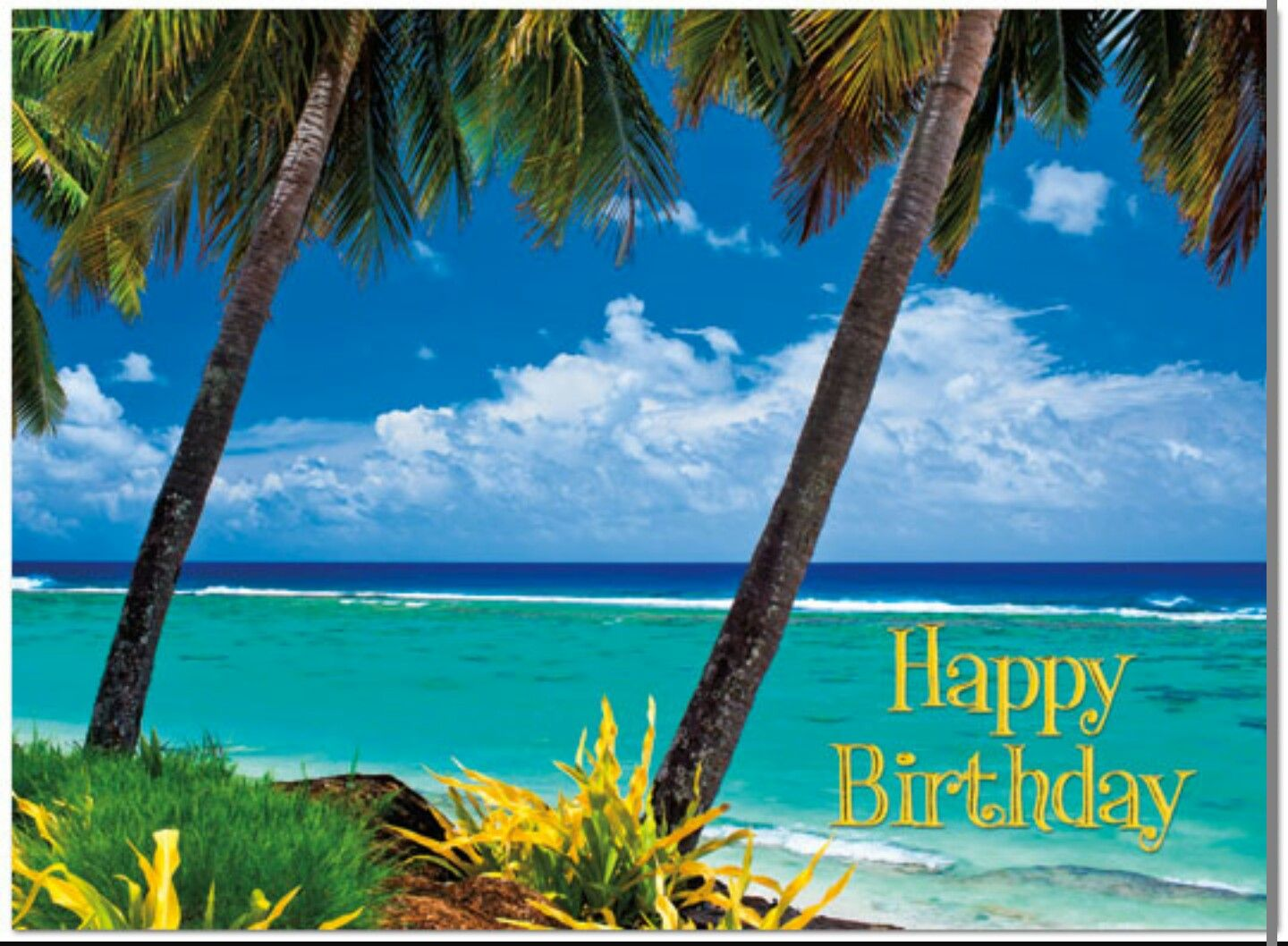 Hbd Beach Palm Trees Ocean Blue Sky With Images