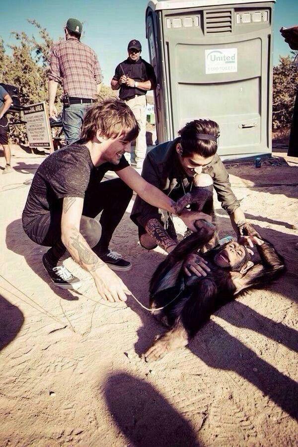 Aww ots Louis and Zayn with a monkey:) its so cute! Louis Tomlinson / Zayn Malik / One Direction