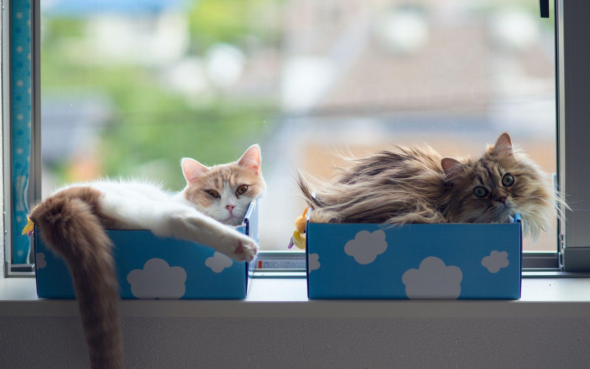 Cat Sommeil Dans Des Boites Fonds D Ecran 1920x1200 Chats Adorables Animaux Amusants Animales