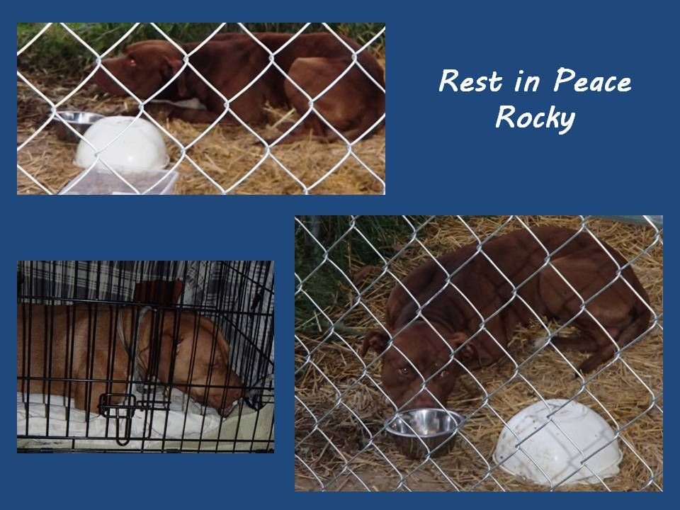 Thanks to the volunteers who helped out with poor Rocky. I think he affected all of us in the same manner. We did more for him that the owner ever did in the one short abusive year of his life. Sto...