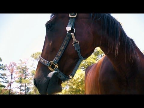 Meet Trudy the Horse | Farm Raised With P. Allen Smith