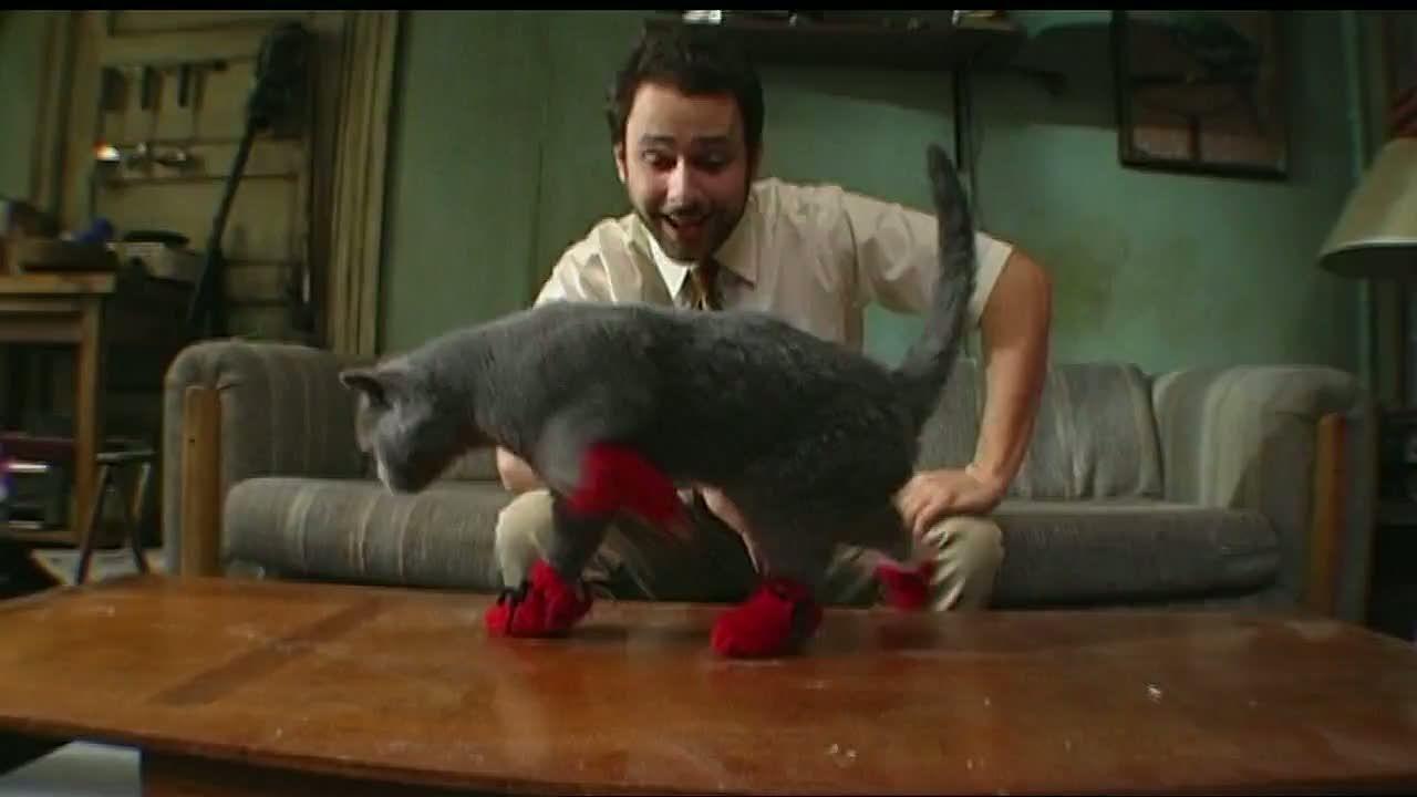 Is Your Cat Making Too Much Noise Get Kitten Mittons Kitten Mittens Kitten It S Always Sunny In Philadelphia