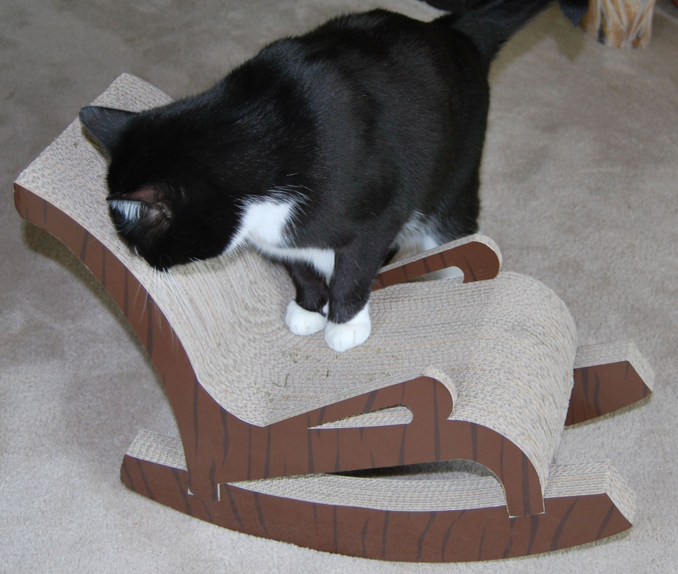 Delicieux Cat Scratch Furniture   Rocky Test Driving The Fat Cat Rocking Chair
