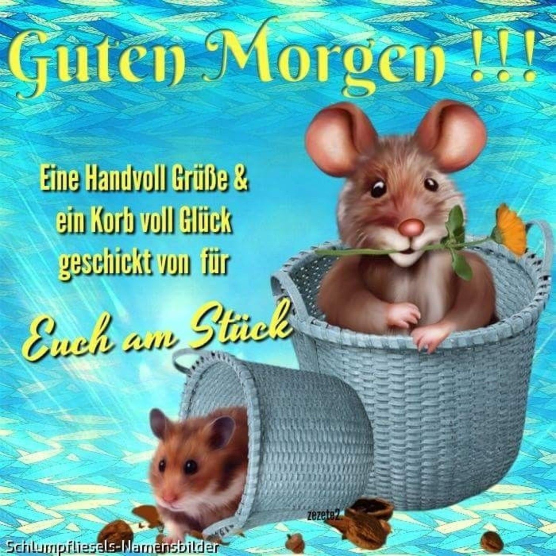 Photo of Guten Morgen Bilder 186 – GBPicsBilder.com