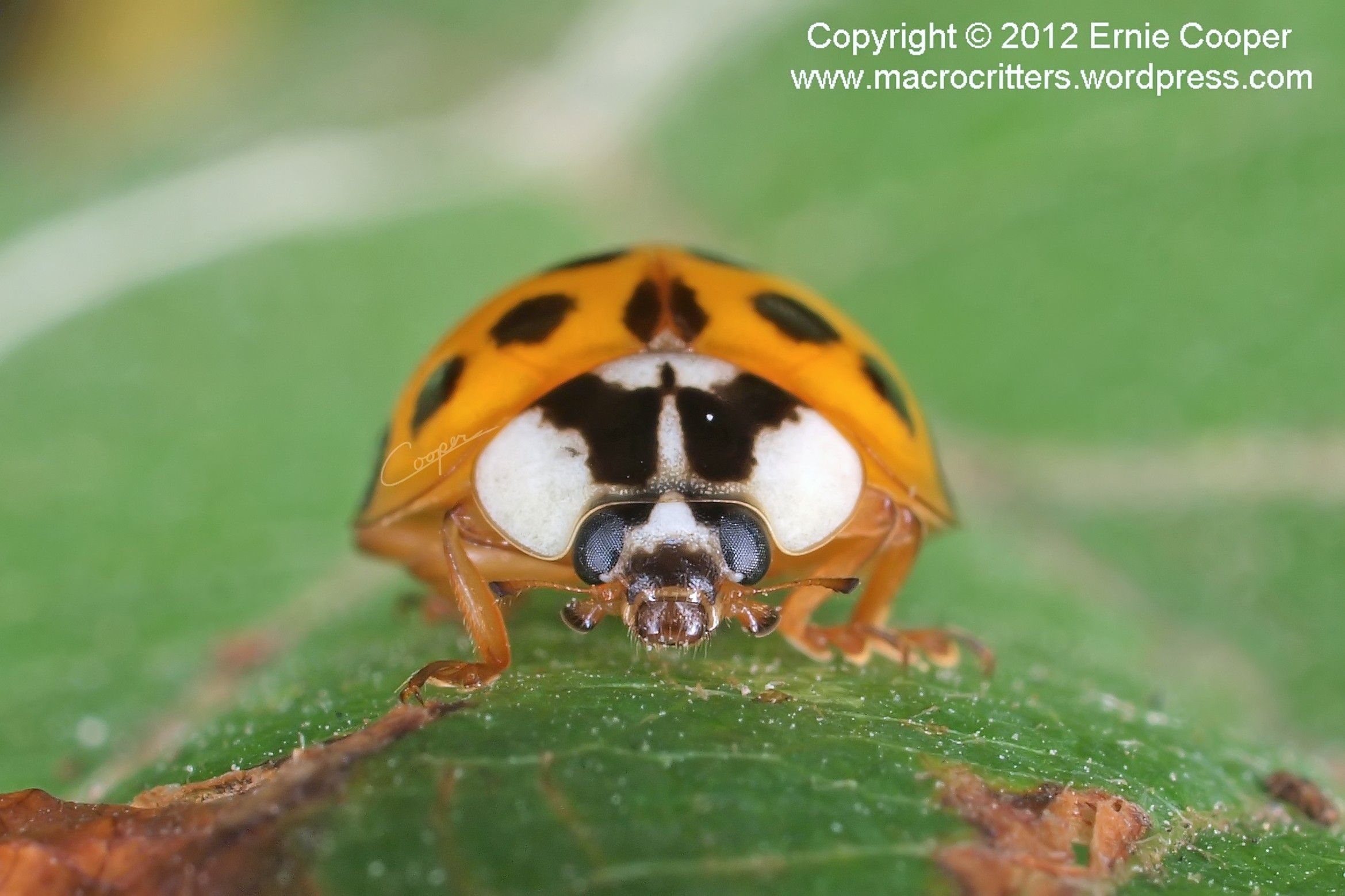 Pin by Pest Control on Pretty Bugs and Insects Animal
