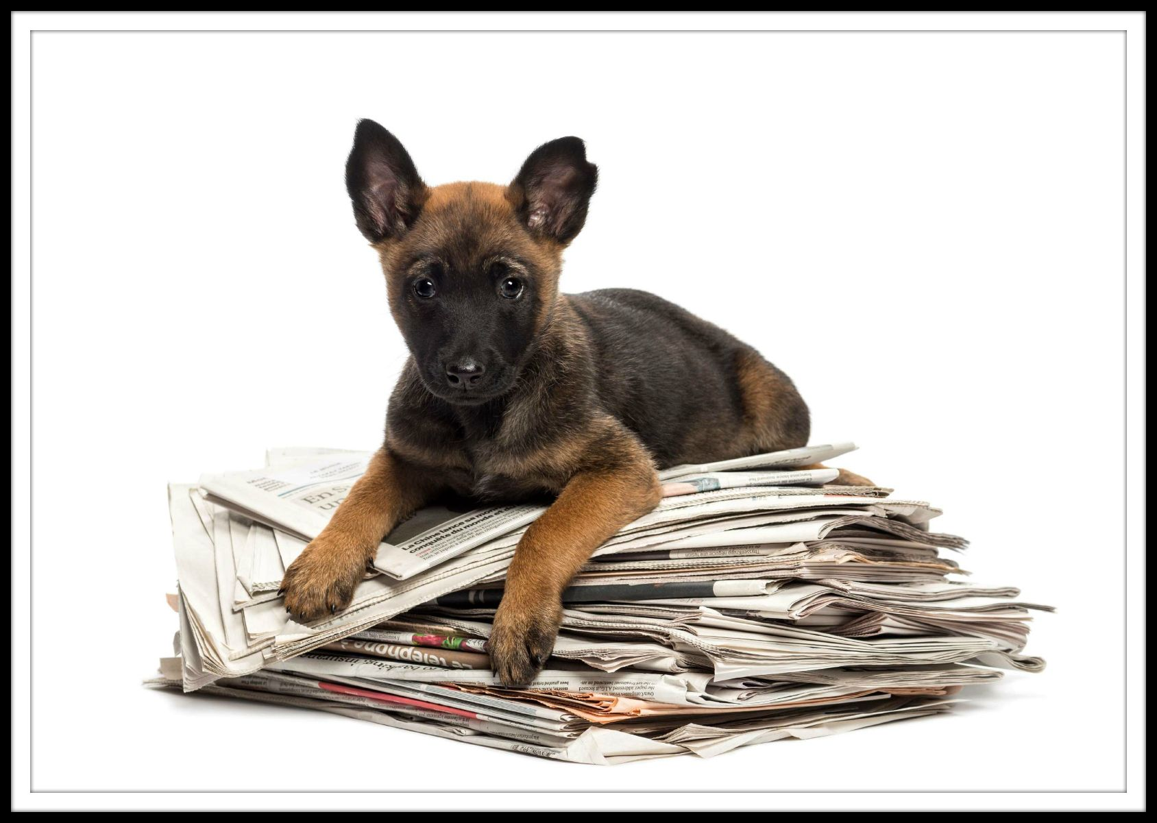 We desperately need newspaper! Several largescale rescues