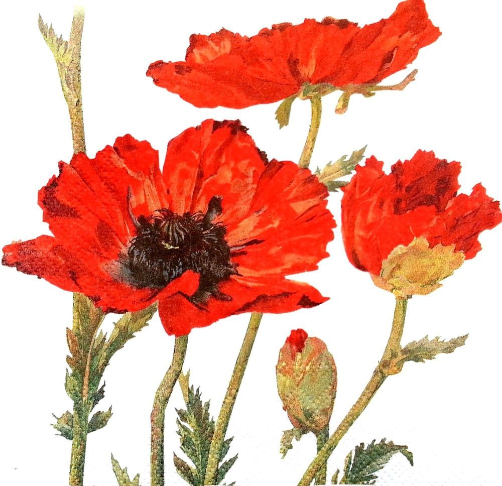 4x Paper Napkins for Decoupage Decopatch Craft Red Poppy