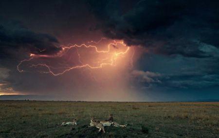 Africa plains Lightning Storm HD Wallpapers, Wallpapers
