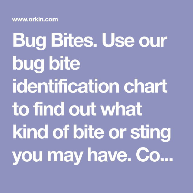 Bug Bites Use Our Bite Identification Chart To Find Out What Kind Of Or Sting You May Have Common Insect Stings With Pictures