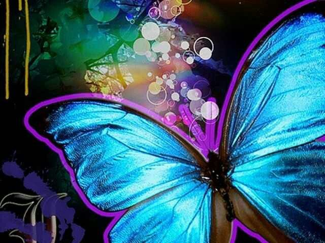 Butterflies are so colorful