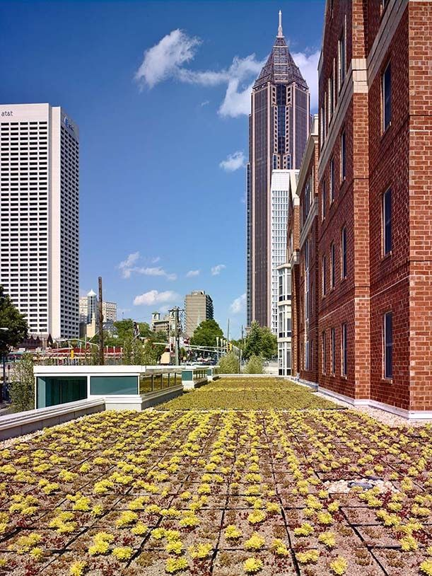 The Green Roof On Top Of The North Ave Dining Hall Provides Energy