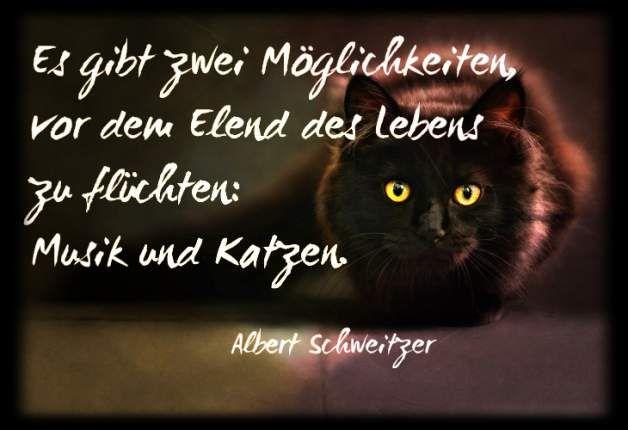 Katzensprüche Albert Schweitzer | Sprüche, Weisheiten und Witze